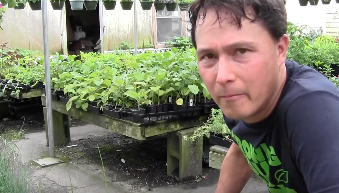 Image Best Nursery In Houston For Perennial Vegetables That Can Grow Year Round Video