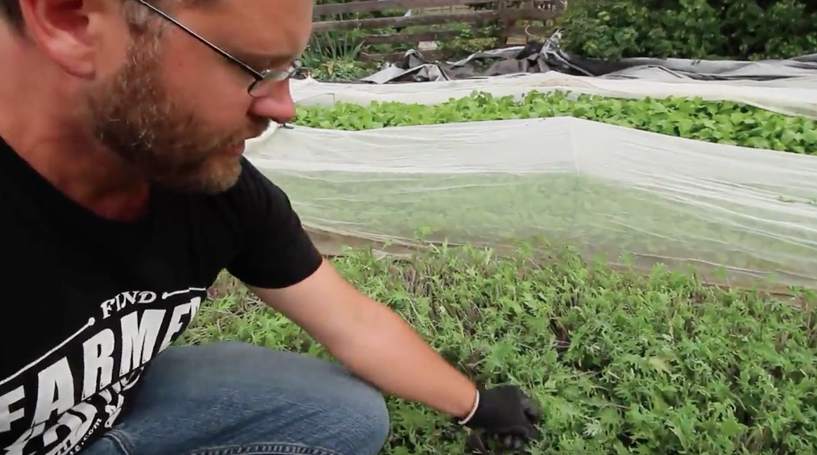 Giving Your Greens A Haircut Video