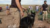 Dakota Access Pipeline attack dogs