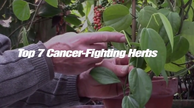 Image: Top 7 Cancer-Fighting Herbs (Video)