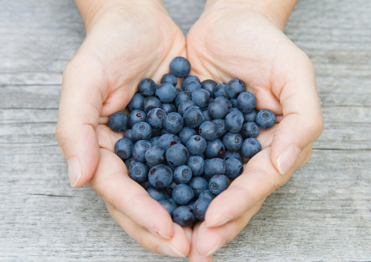Tips To Sprout Free Blueberry Plants From Store Bought