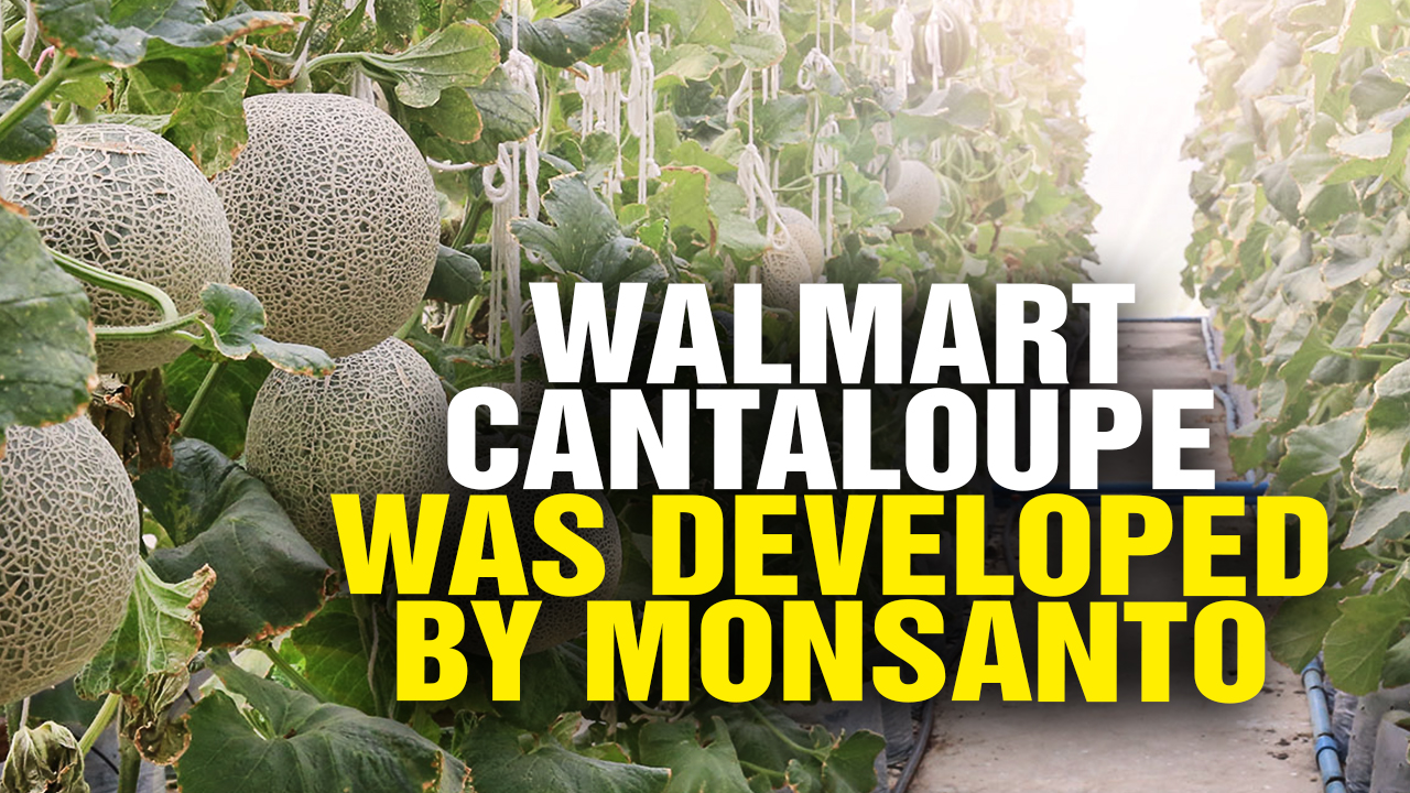 Image: Watch Out: That New Walmart Cantaloupe Was Developed by Monsanto (Video)