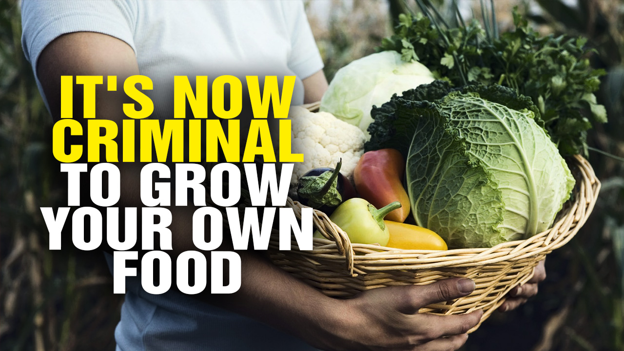 Image: It's Now CRIMINAL to Grow Food in Your Own Yard! (Video)
