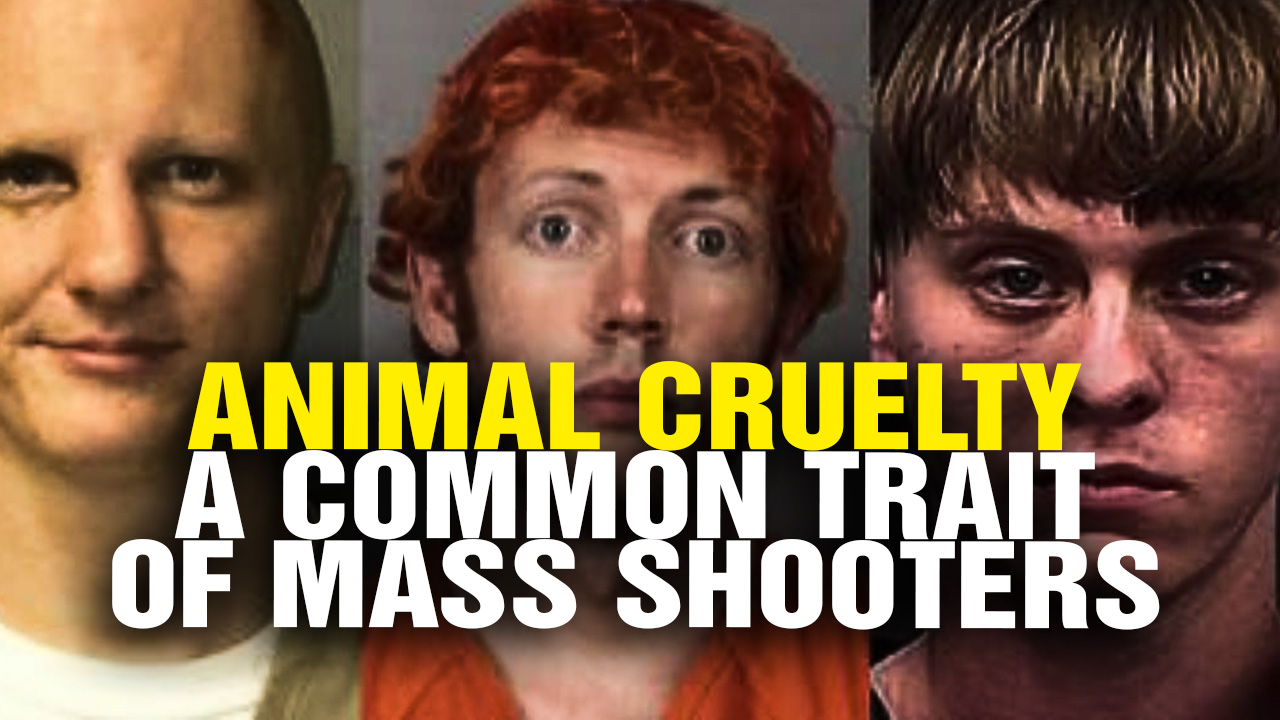 Image: ANIMAL CRUELTY a Common Trait of Mass Shooters (Video)